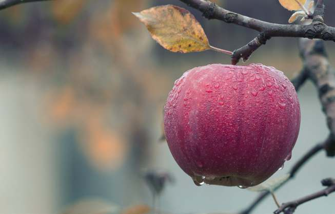 apple on tree-wet_pexels-photo-257840