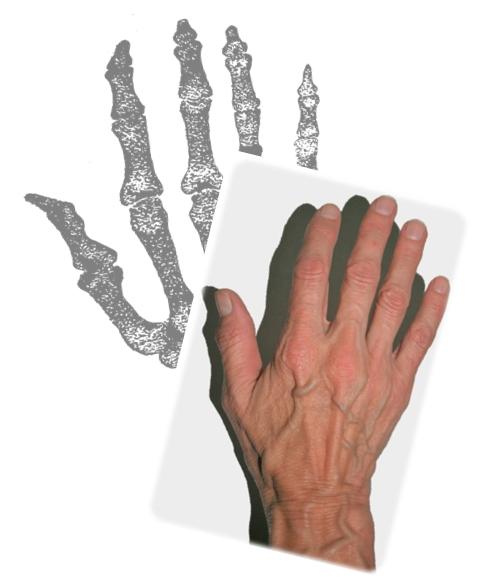 hand n bones 1