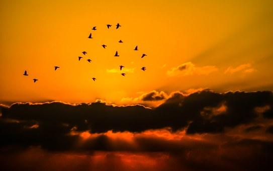 silhouette sun birds sky-721912__340