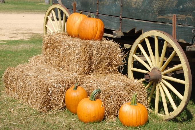 pumpkins haybales wagon_pexels-photo-164158