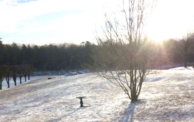 Snowy morning_cropped