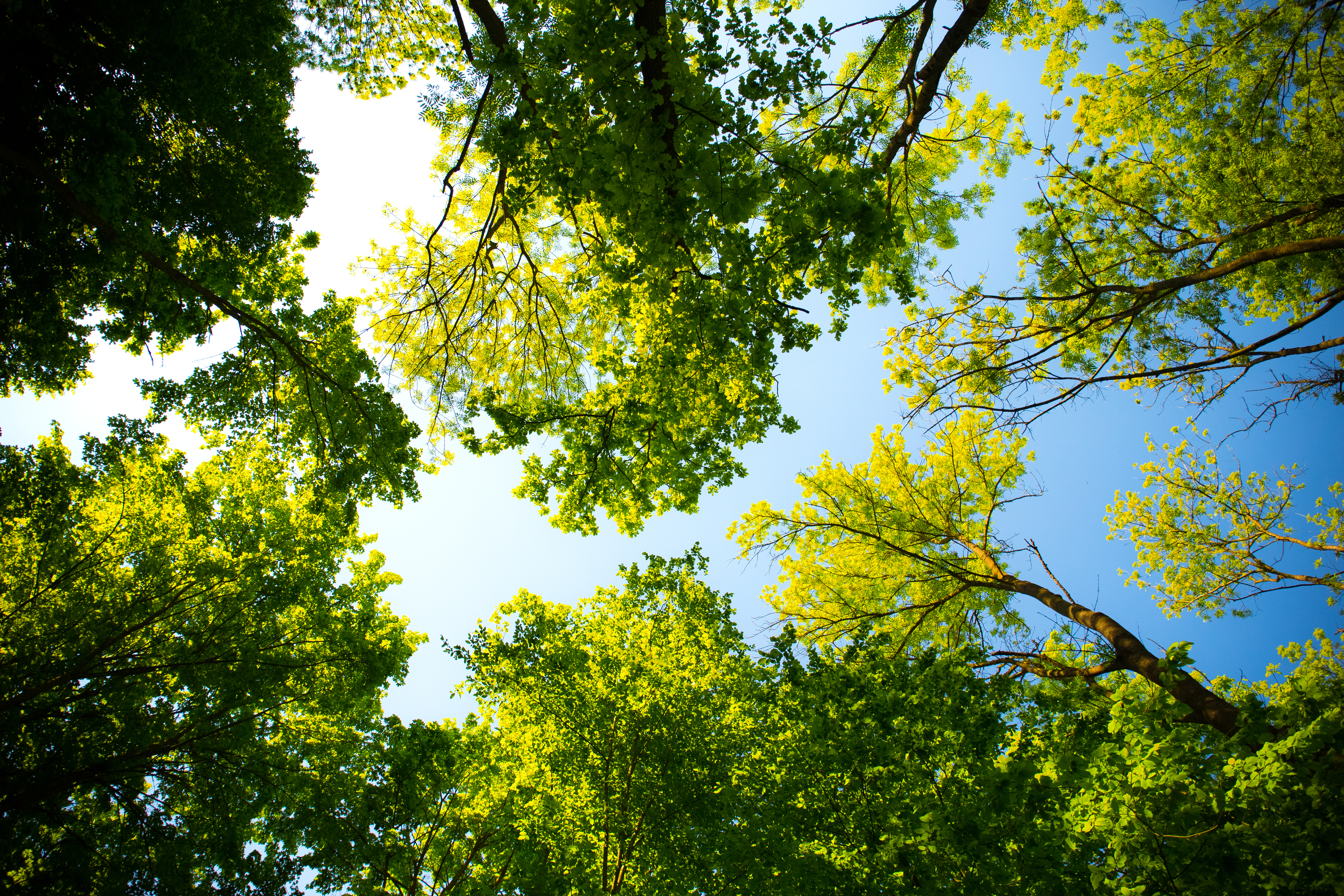 green trees and sky_looking up_pexels-photo-589802 a