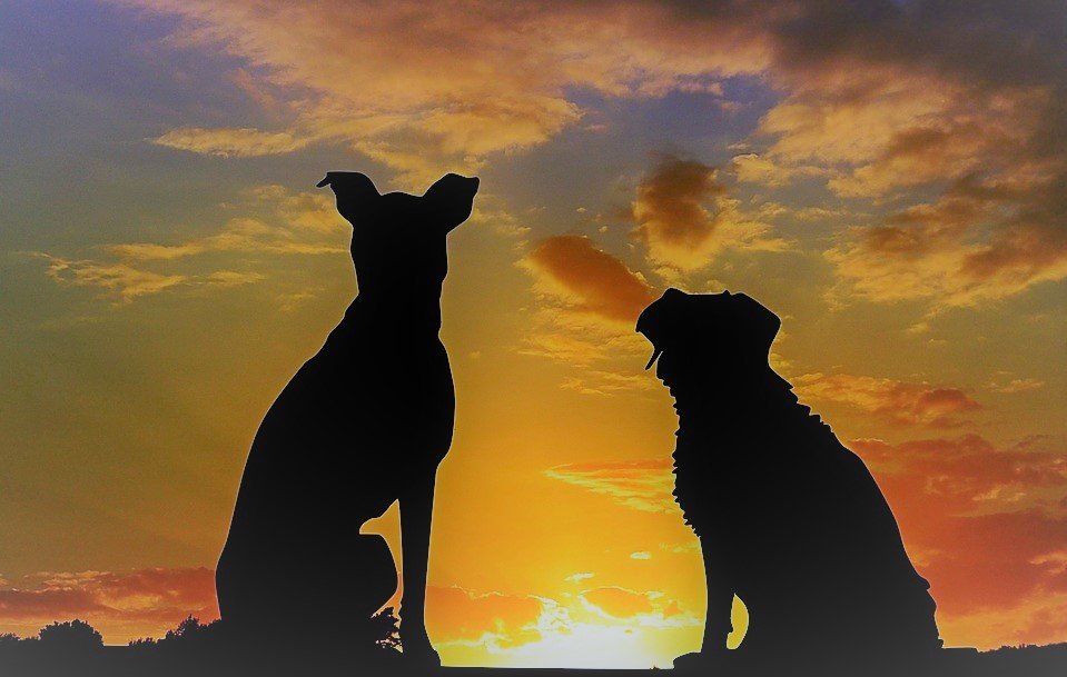 dogs silhouette sunset-2222801_960_720_pixabay_edited