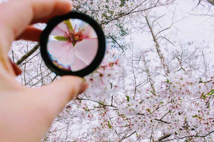 magnifying glass blossoms_pexels-photo-979927