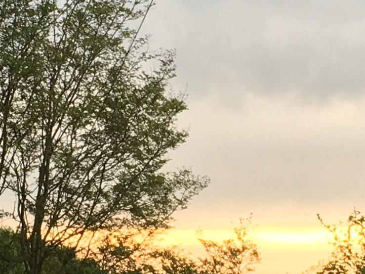 sunrise spring 0419