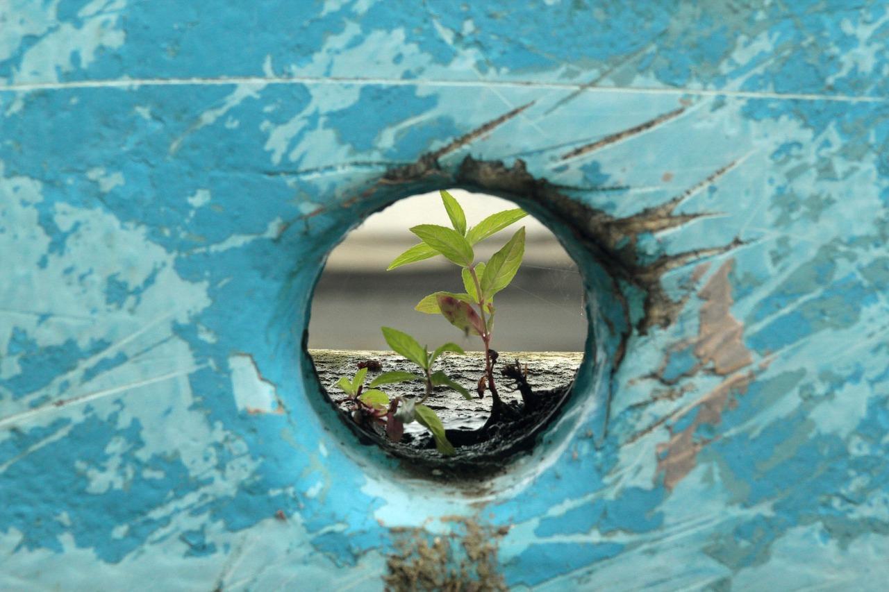 resilience-plant-boat-3927685_1280_pixabay_K Thomas