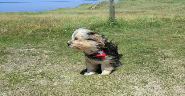 wind in face dog_JSch_pixabay_600x314px