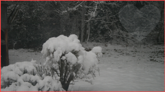 winter snow bush n heart_red outline