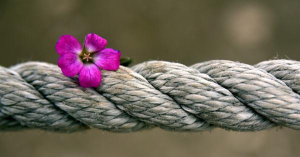 blossom rope_Ulrike Leone_Pixabay_edited